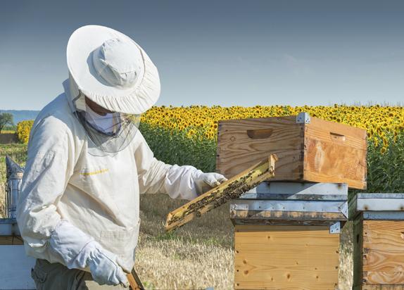 Beekeeping Products